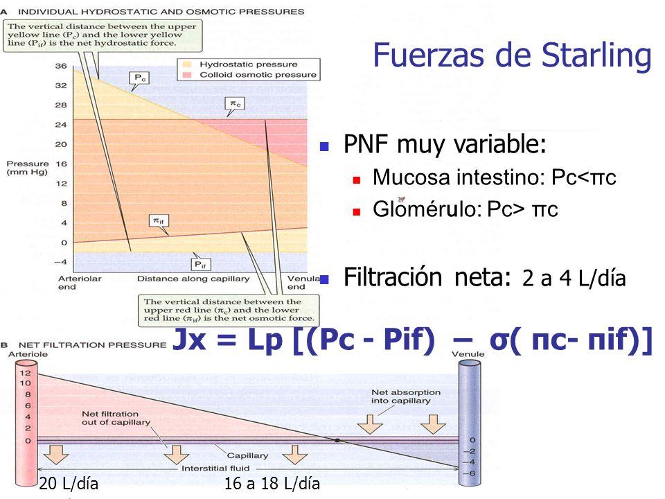 Fuerzas de Starling Jx = Lp [(Pc - Pif) – σ( πc- πif)]